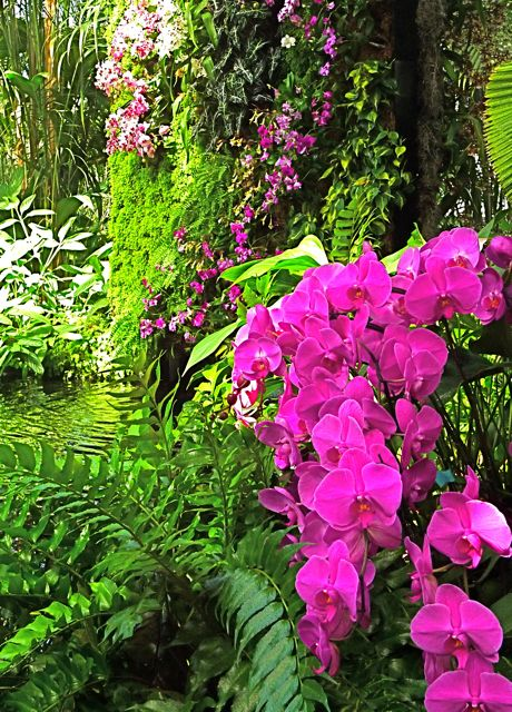 At the New York Botanical Garden, electric-hued orchids almost leap from Patrick Blanc's mur vegetal, an exotic vertical garden planted with moss and ferns, rising from a pool of water.