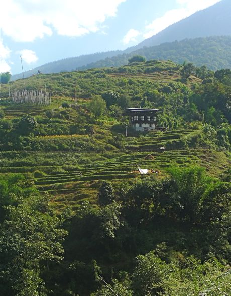 A farm with white prayer flags and rice terraces on the road between Punakha and Trongsa.