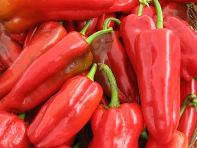 Autumn bounty: Sun-ripened sweet red Italian peppers from Wild Hare Farm at the Carrboro Farmer's Market.