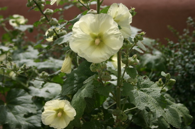 "Hollyhocks in never-never land--part of the pervading fantasy of Santa Fe. One writer has described New Mexico's adobe capital as ""Tahiti in the desert."""